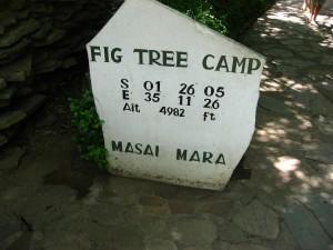 fig tree フィグツリーキャンプ