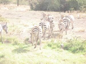 Nakuru ナクル